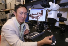 David Hu, professor in the School of Biological Sciences