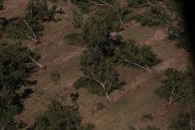 Hurricane Michael razed farmland across south Georgia in October. (Courtesy of Georgia Department of Agriculture)
