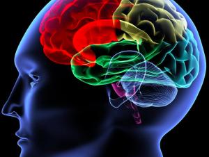 Graphic representation of the human brain