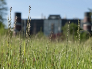 EcoCommons Grass