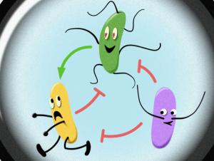 The hidden social network of microbes