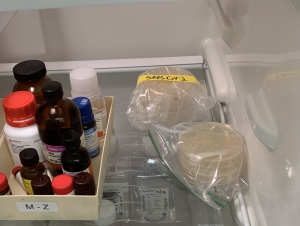 Samples of portions of the coronavirus (the petri dishes on the right) in a Georgia Tech lab refrigerator. (Photo Jennifer Leavey)
